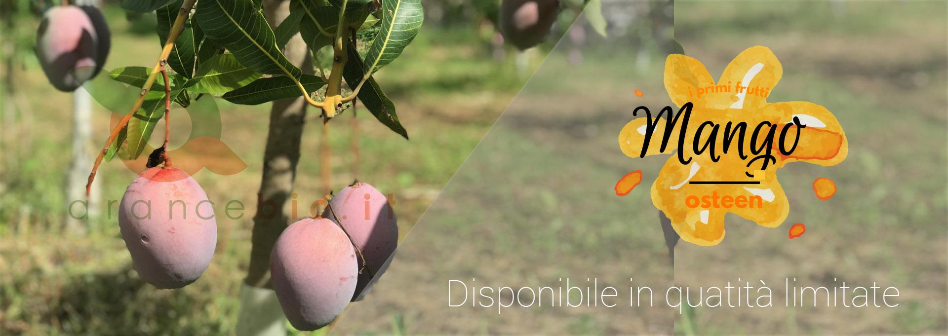 Mango di Sicilia Bio